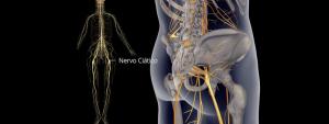 Figulra ilustrativa do nervo ciático em amarelo.