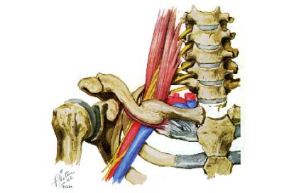 Imagem anatômica do canal cervicotorácico.